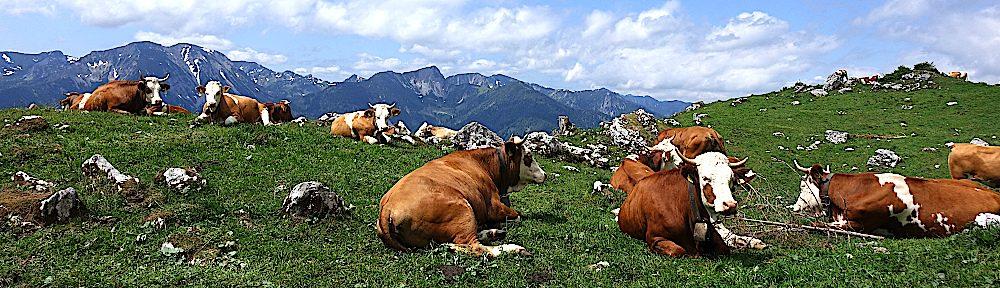 Almwirtschaftlicher Verein Oberbayern